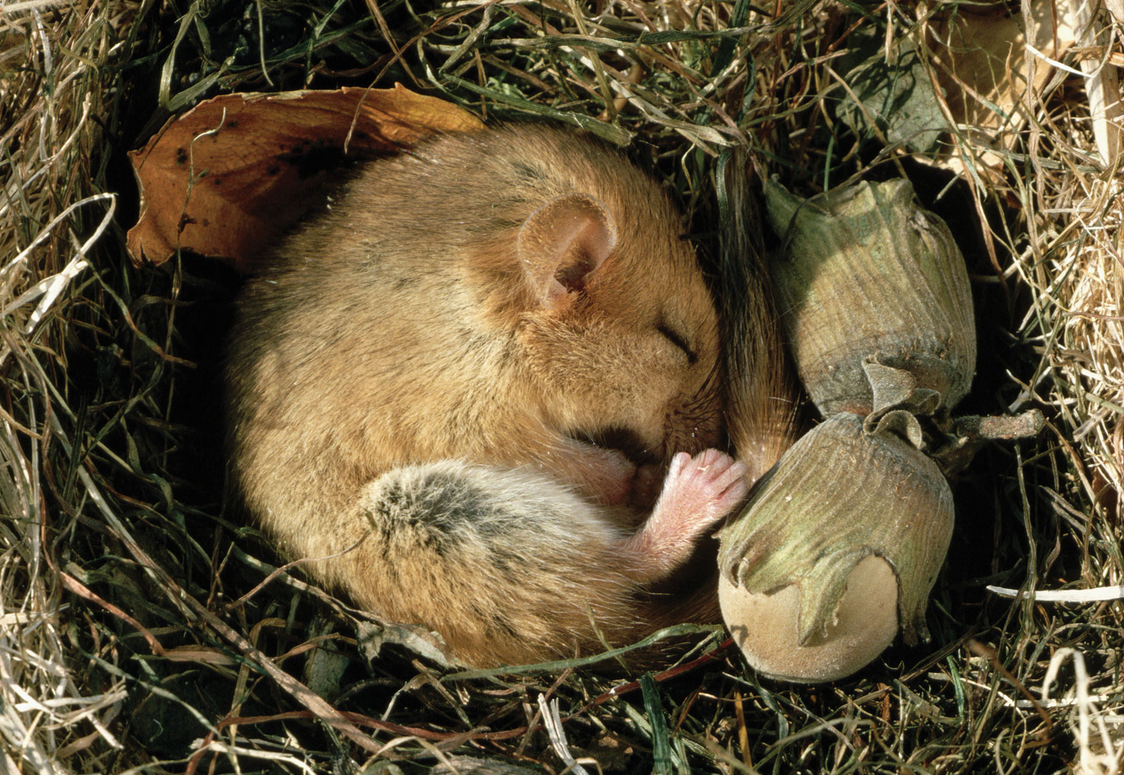 Hibernate That Animals Hibernating